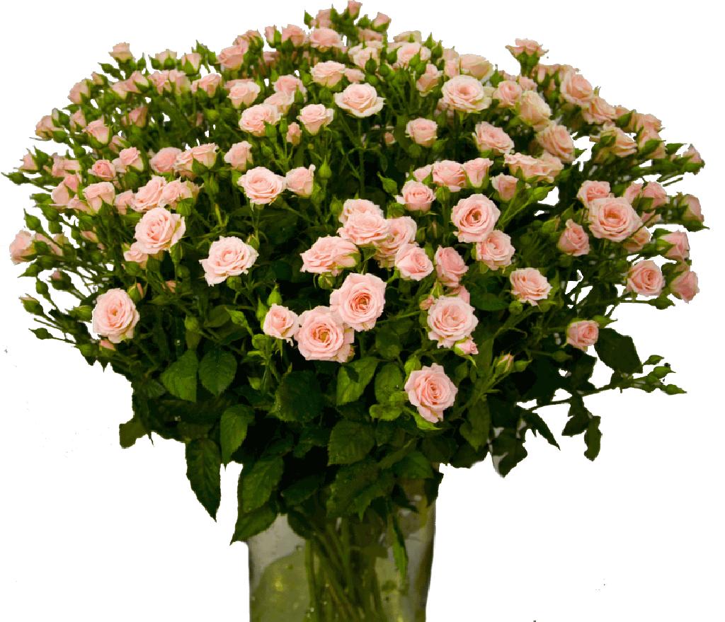 Кустовая роза цена